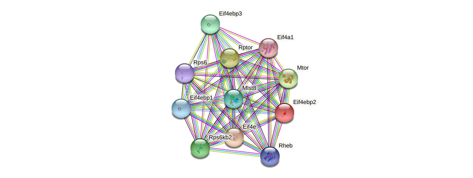 Eif4ebp2 protein (mouse) - STRING interaction network