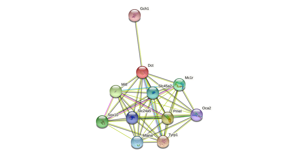 Dct protein (mouse) - STRING interaction network