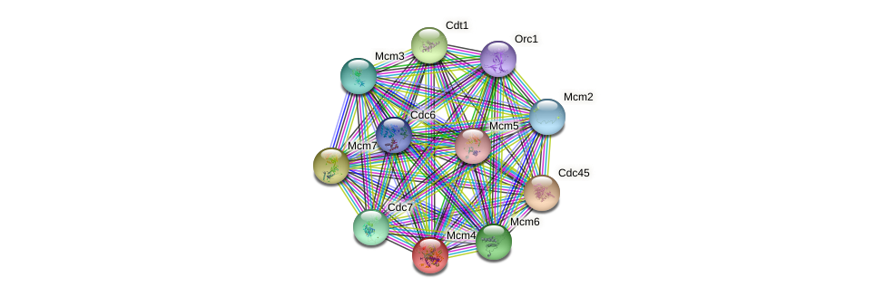 Mcm4 protein (mouse) - STRING interaction network