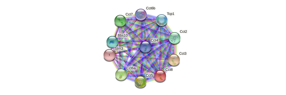 Cct8 protein (mouse) - STRING interaction network