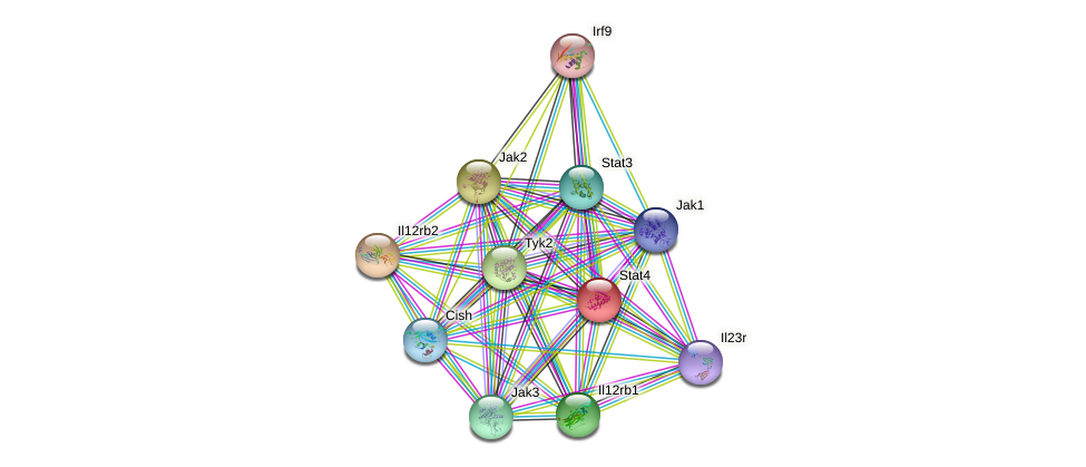 Stat4 protein (mouse) - STRING interaction network