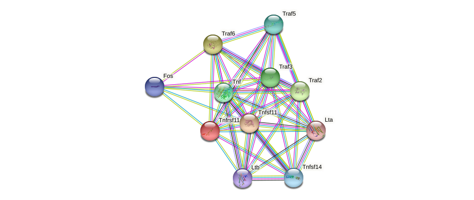 Tnfrsf11a protein (mouse) - STRING interaction network
