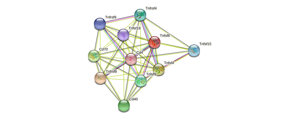Tnfsf8 protein (mouse) - STRING interaction network