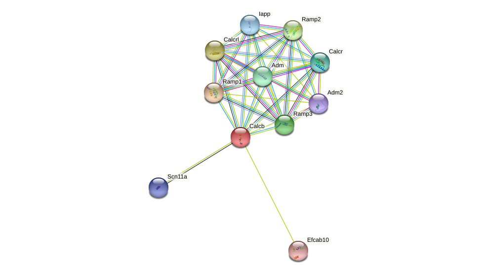 Calcb protein (mouse) - STRING interaction network