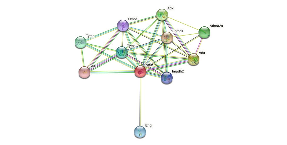 Nt5e protein (mouse) - STRING interaction network