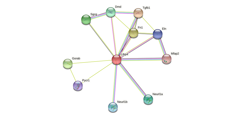 Ltbp4 protein (mouse) - STRING interaction network