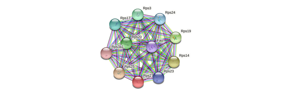 Rps27l protein (mouse) - STRING interaction network