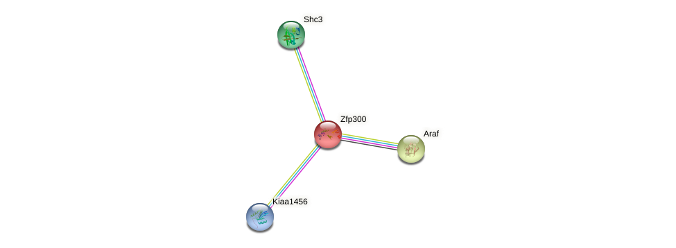Zfp300 protein (mouse) - STRING interaction network