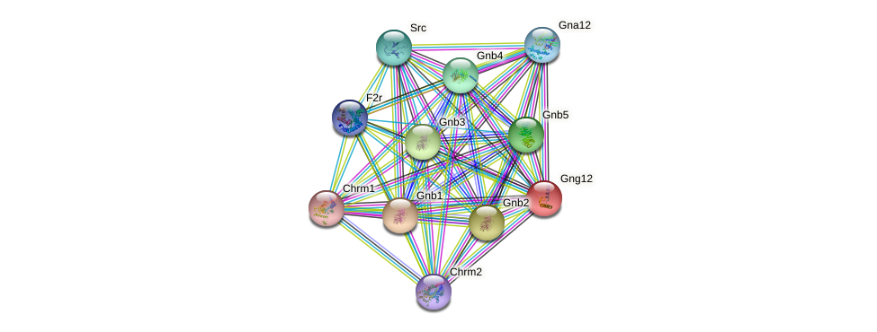 Gng12 protein (mouse) - STRING interaction network