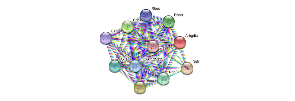 Arhgdia protein (mouse) - STRING interaction network
