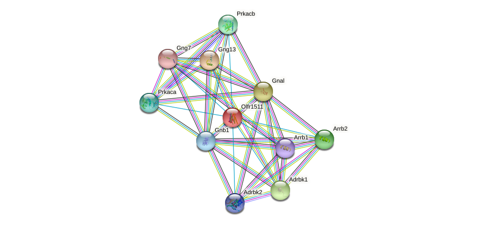 Olfr1511 protein (mouse) - STRING interaction network