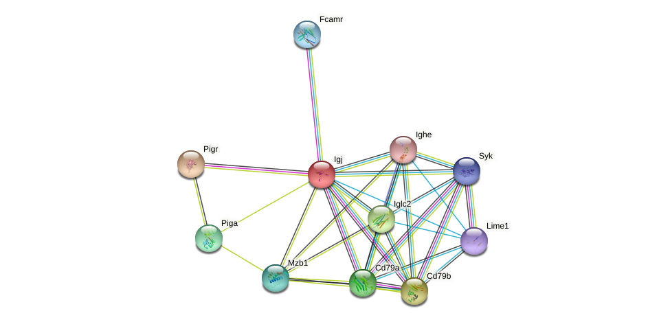Igj protein (mouse) - STRING interaction network