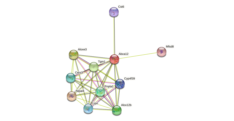Abca12 protein (mouse) - STRING interaction network