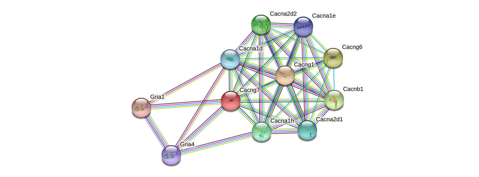 Cacng7 protein (mouse) - STRING interaction network