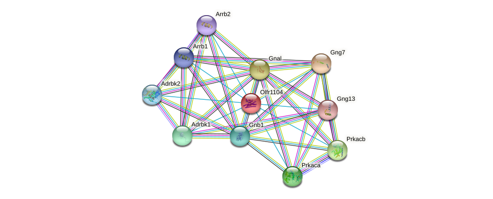 Olfr1104 protein (mouse) - STRING interaction network