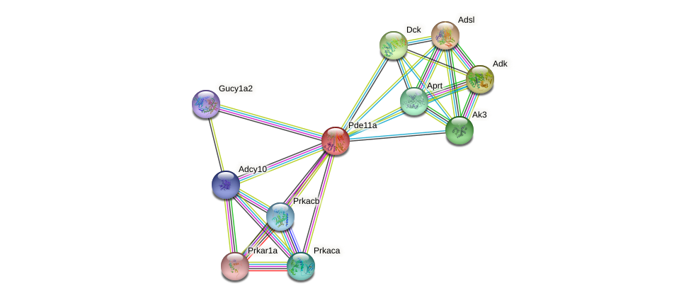 Pde11a protein (mouse) - STRING interaction network