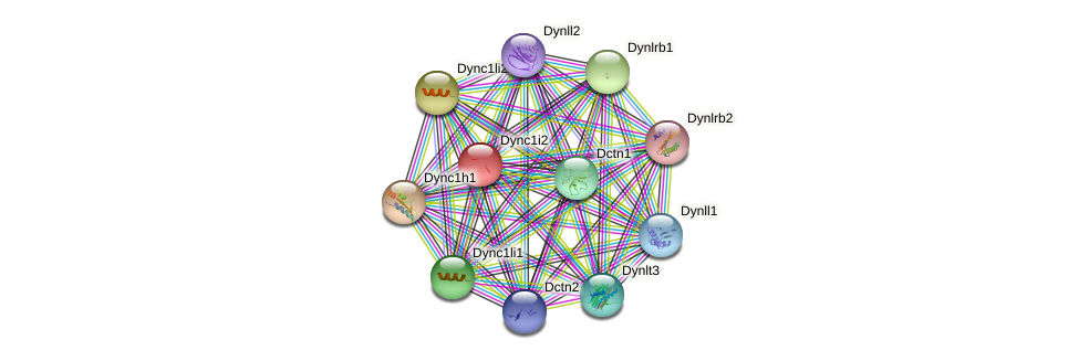 Dync1i2 protein (mouse) - STRING interaction network