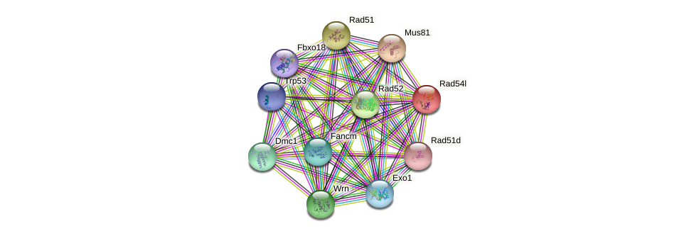 Rad54l protein (mouse) - STRING interaction network