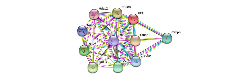 Klf4 protein (mouse) - STRING interaction network