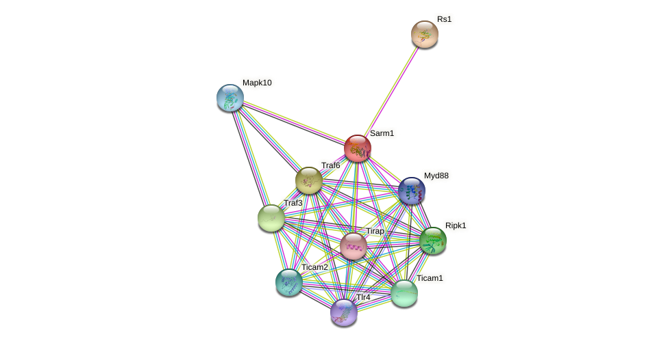 Sarm1 protein (mouse) - STRING interaction network