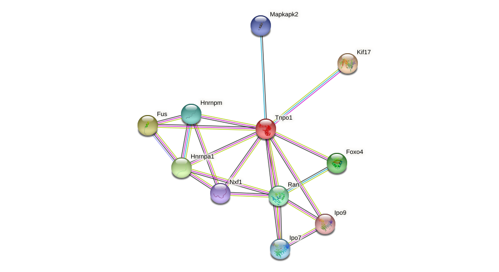 Tnpo1 protein (mouse) - STRING interaction network