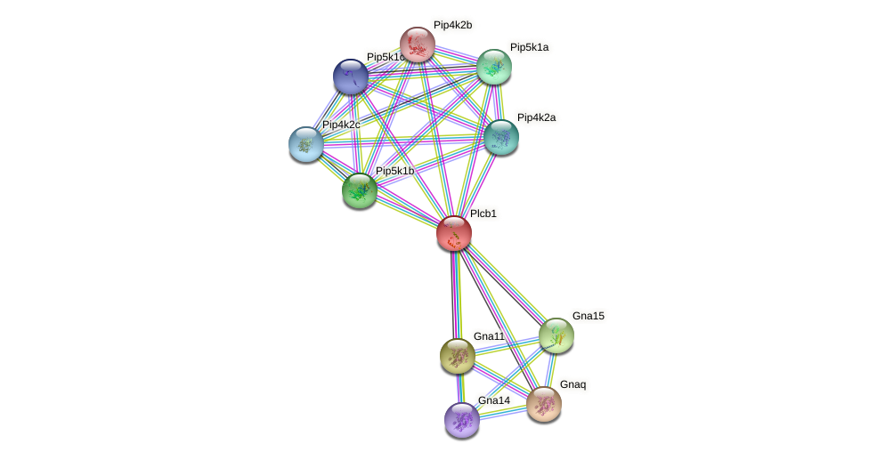 Plcb1 protein (mouse) - STRING interaction network