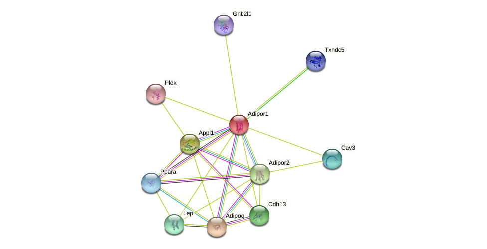Adipor1 protein (mouse) - STRING interaction network