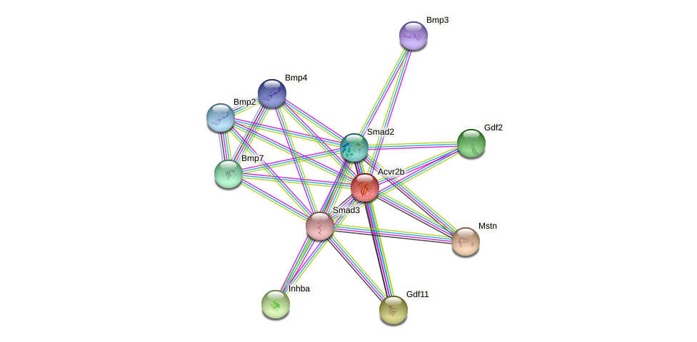 Acvr2b protein (mouse) - STRING interaction network