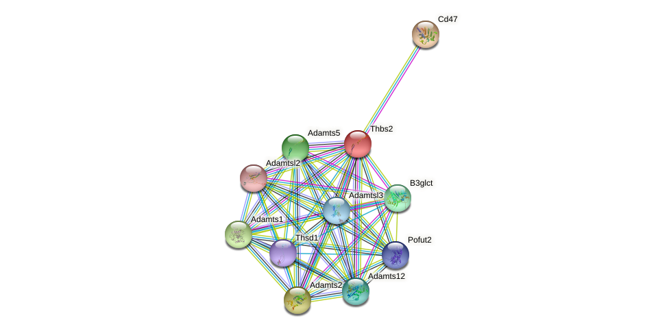 Thbs2 protein (mouse) - STRING interaction network