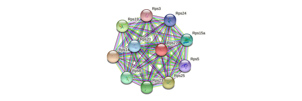 Rps27 protein (mouse) - STRING interaction network