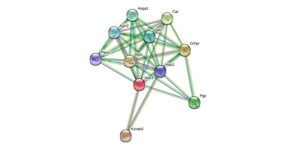 Hao1 protein (Rattus norvegicus) - STRING interaction network