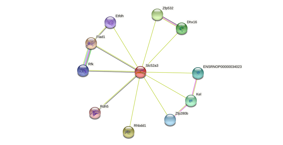 Slc52a3 protein (Rattus norvegicus) - STRING interaction network