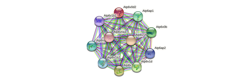 Atp6v0d2 protein (Rattus norvegicus) - STRING interaction network
