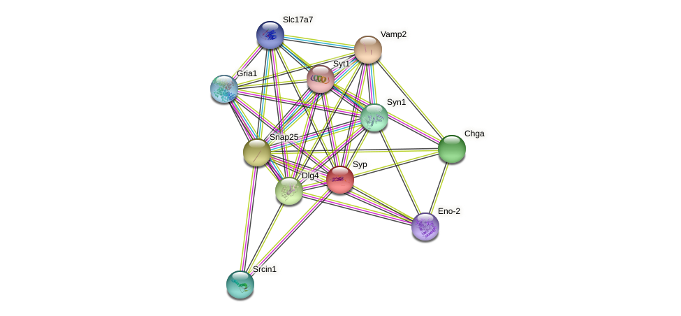 Syp protein (Rattus norvegicus) - STRING interaction network