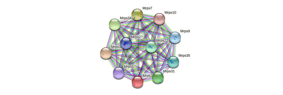 Mrps25 protein (Rattus norvegicus) - STRING interaction network