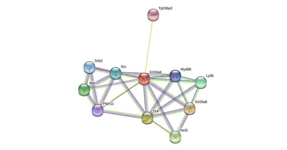 S100a8 protein (Rattus norvegicus) - STRING interaction network