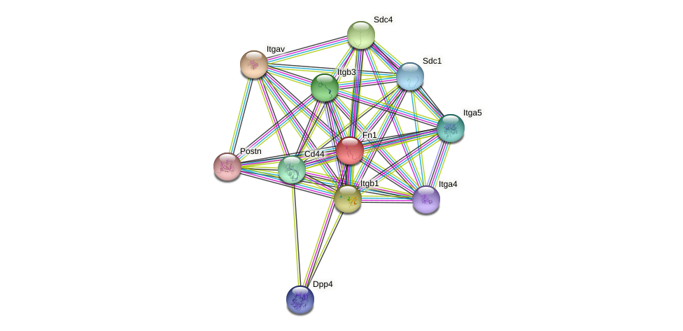 Fn1 protein (Rattus norvegicus) - STRING interaction network