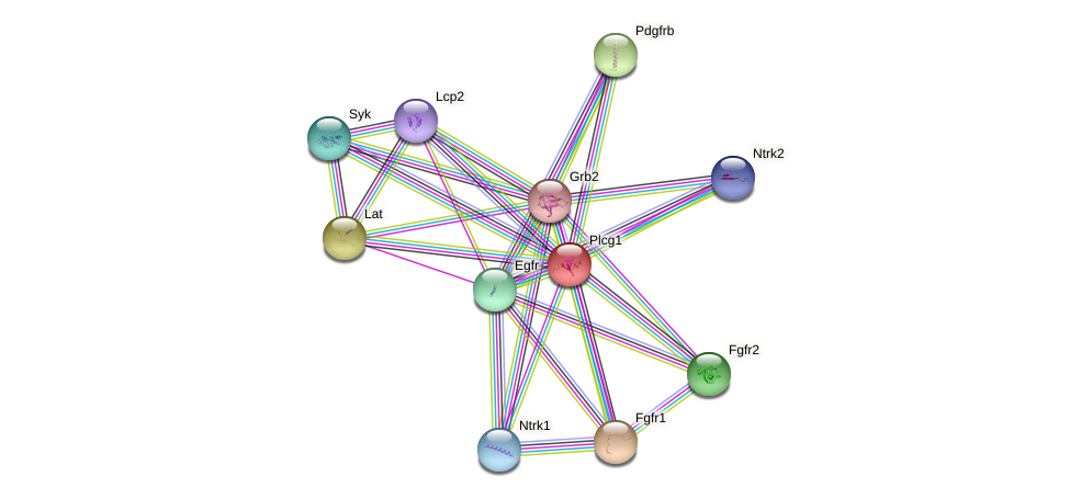 Plcg1 protein (Rattus norvegicus) - STRING interaction network