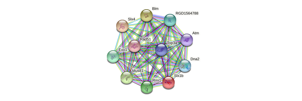 Slx1b protein (Rattus norvegicus) - STRING interaction network