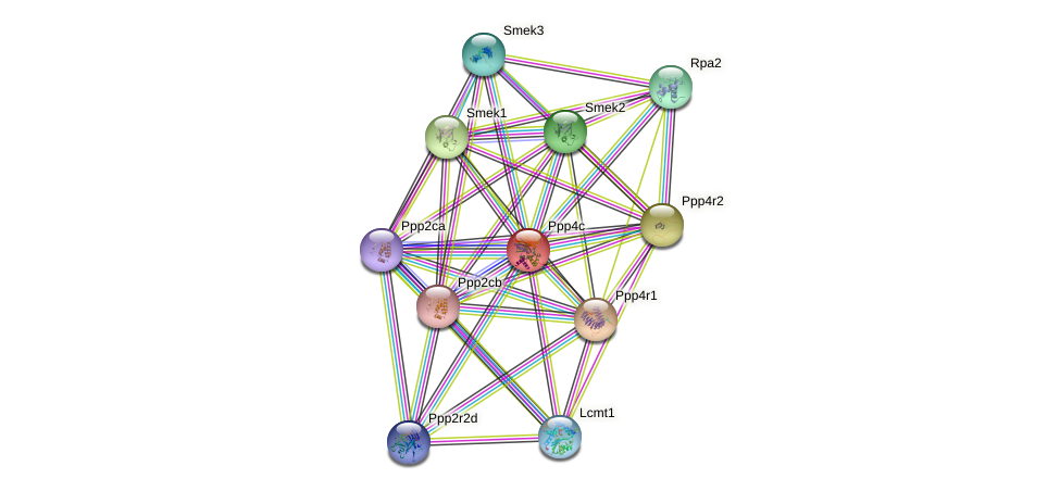 Ppp4c protein (Rattus norvegicus) - STRING interaction network