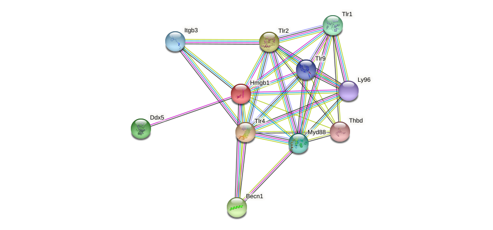 Hmgb1 protein (Rattus norvegicus) - STRING interaction network