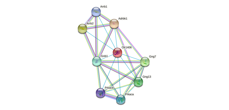 Olr1406 protein (Rattus norvegicus) - STRING interaction network