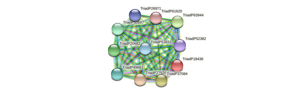 TriadP18436 protein (Trichoplax adhaerens) - STRING interaction network