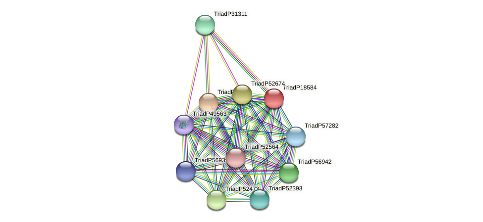 TriadP18584 protein (Trichoplax adhaerens) - STRING interaction network