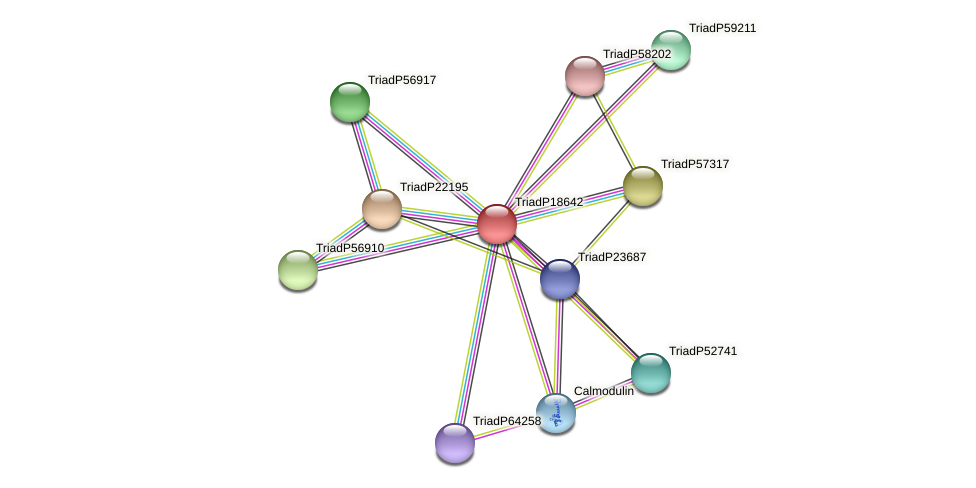 TriadP18642 protein (Trichoplax adhaerens) - STRING interaction network