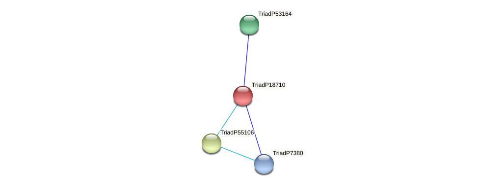 TriadP18710 protein (Trichoplax adhaerens) - STRING interaction network