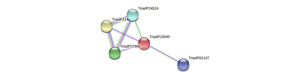 TriadP19045 protein (Trichoplax adhaerens) - STRING interaction network