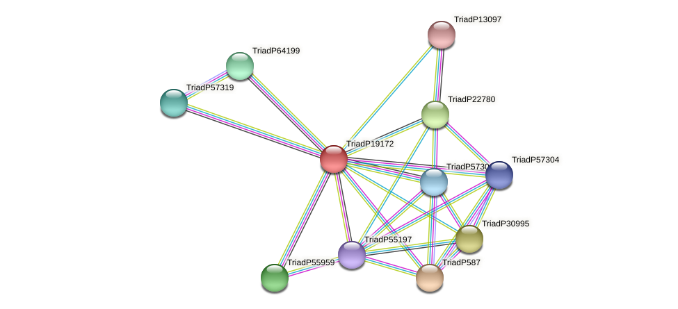 TriadP19172 protein (Trichoplax adhaerens) - STRING interaction network