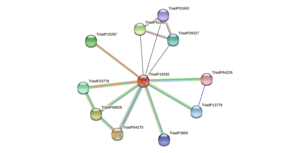 TriadP19292 protein (Trichoplax adhaerens) - STRING interaction network