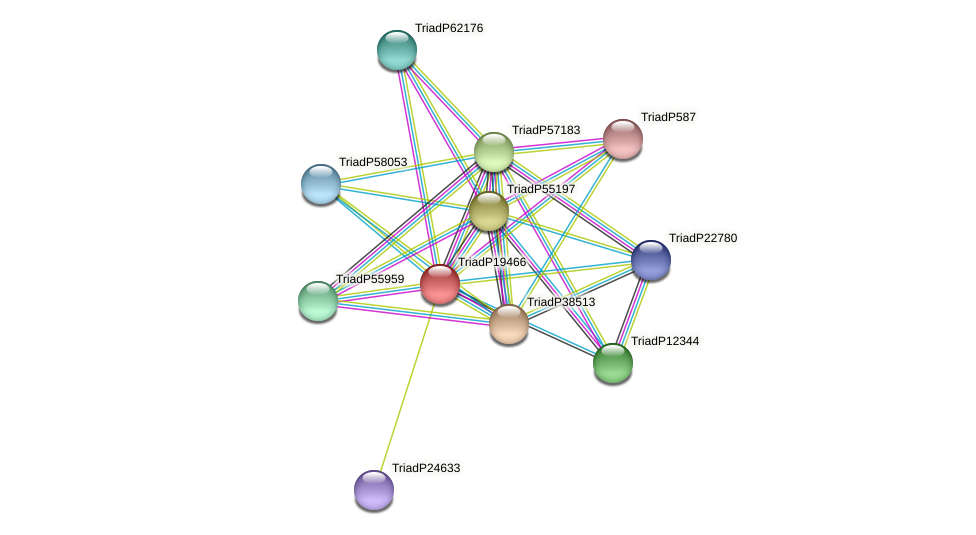 TriadP19466 protein (Trichoplax adhaerens) - STRING interaction network